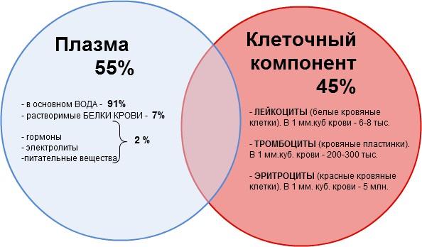 Норма лейкоцитов в крови у женщин до 30